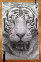 Tiger by AtomiccircuS