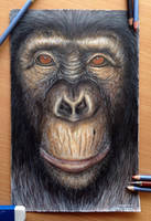 Ape color pencil drawing by AtomiccircuS