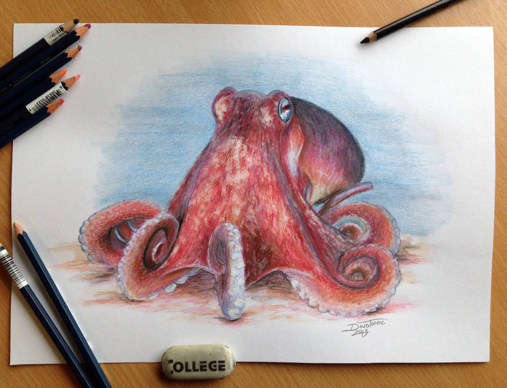 Octopus Pencil Drawing by AtomiccircuS