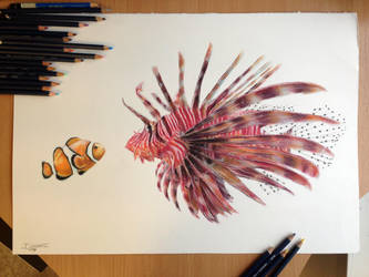 Clownfish and his friend drawing by AtomiccircuS