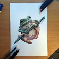 Frog Color Pencil Drawing by AtomiccircuS