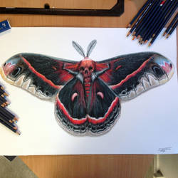 Moth Color Pencil Drawing by AtomiccircuS