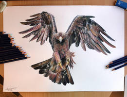 Golden Eagle Color pencil drawing by AtomiccircuS