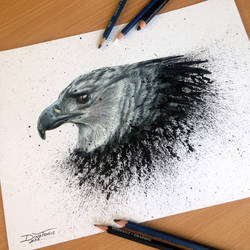 Harpy Eagle Pencil Drawing by AtomiccircuS