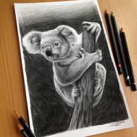 Koala Pencil Drawing by AtomiccircuS