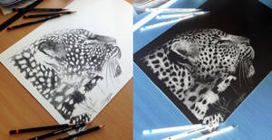 Inverted Leopard Pencil Drawing by AtomiccircuS