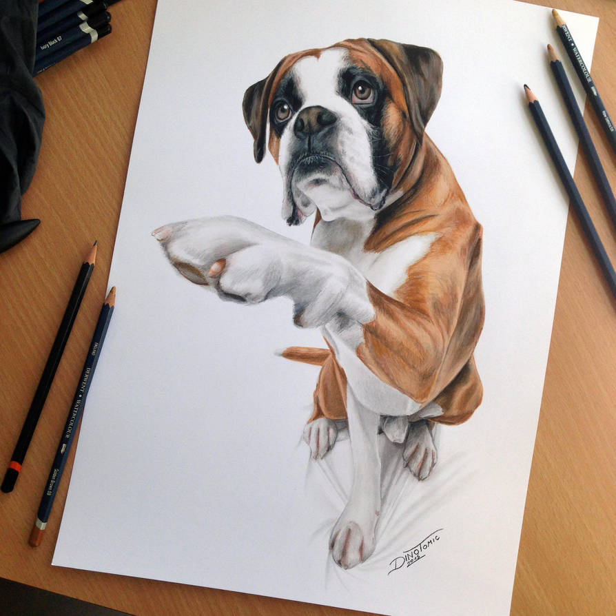 Dog color pencil drawing by atomiccircus