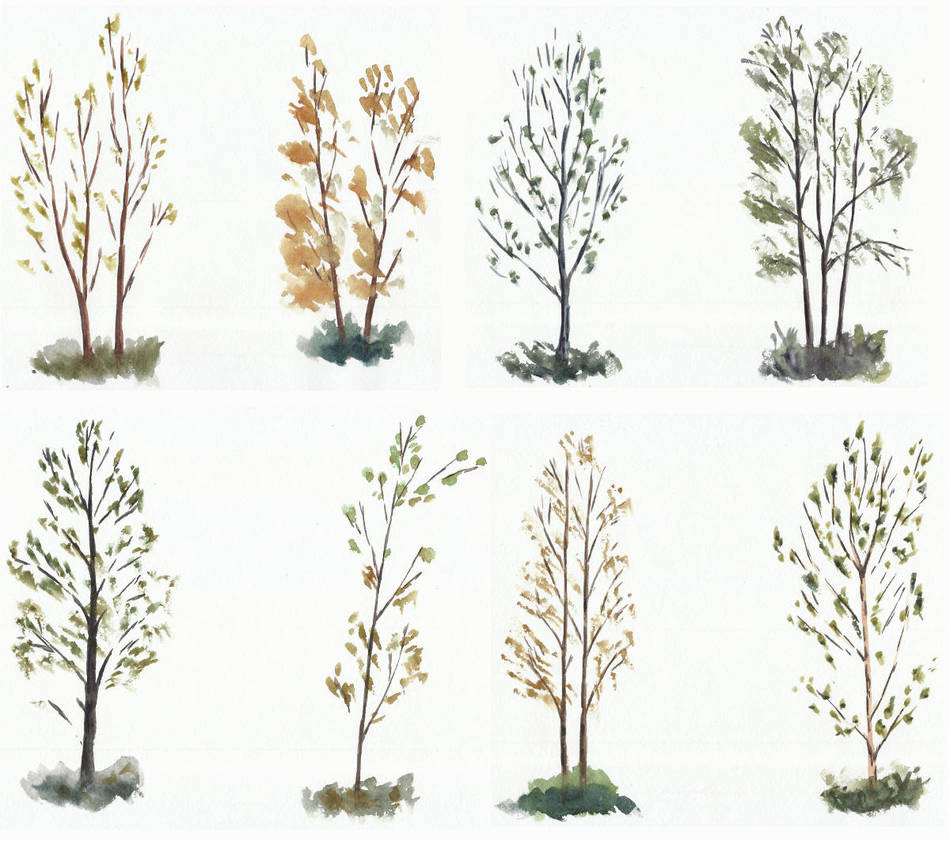 Trees studies/sketches by tulvit