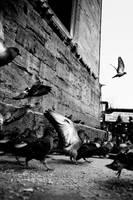 birds of istanbul by GokhanTutak