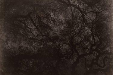 Darktrees by SkylerBrown
