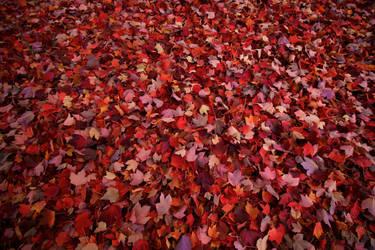 November by SkylerBrown