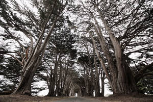Cypress Tunnel by SkylerBrown