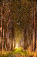 little autumn forest by edinaB