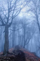foggy autumn forest by EdinaBaltas