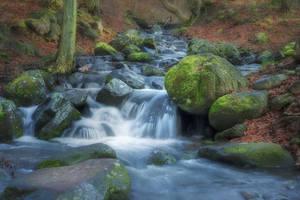 silky-way of forest by edinaB