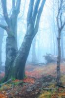 mysterious path by edinaB