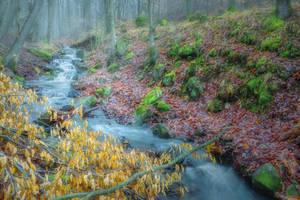 forest creek by EdinaBaltas
