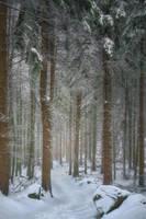 silence of the woods by edinaB