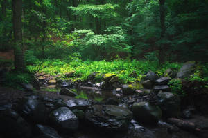 forest performance by edinaB