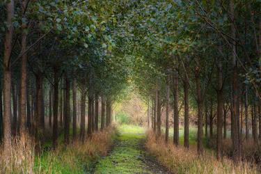 forest gate by EdinaBaltas