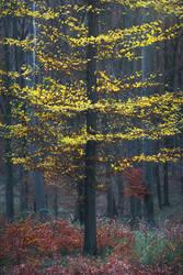 autumn glow... by edinaB