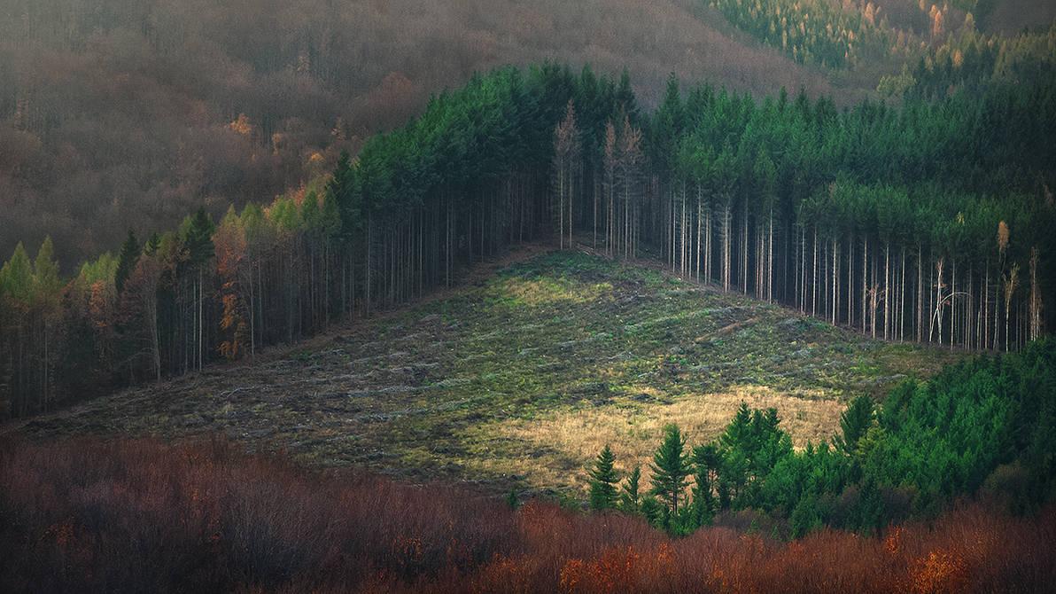 eye of the woods... by edinaB