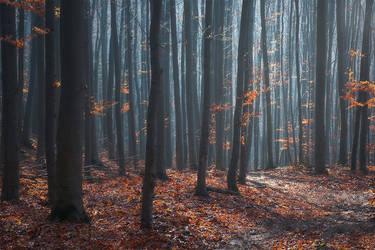 autumn in december... by edinaB