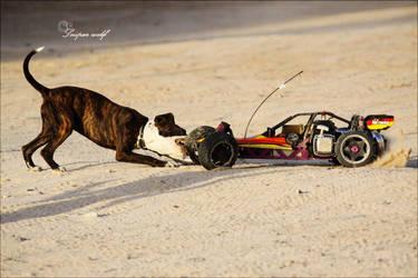 pitbull attack by SNiPERWOLF-UAE