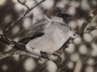 Sparrow by kikilee1380