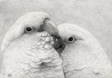 Cockatoo cuddles by shanskala