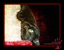 ::cat:: by Phantom-of-light