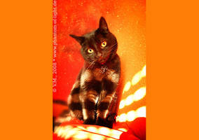 ::4870:: beloved cat by Phantom-of-light