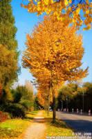 ::golden.trees:: by Phantom-of-light