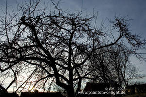 ::cold.day.tree:: by Phantom-of-light