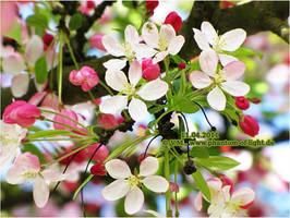 ::spring:: by Phantom-of-light