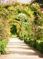 ::arc.of.roses:: by Phantom-of-light