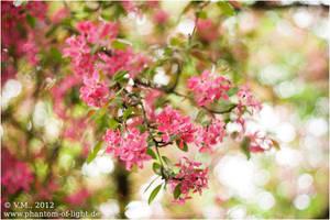 ::beginning.of.spring:: by Phantom-of-light