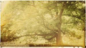 ::lone.tree:: by Phantom-of-light