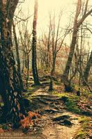 ::winter forest walk:: by Phantom-of-light