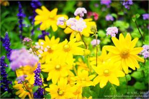 ::yellow.and.purple.flowers:: by Phantom-of-light