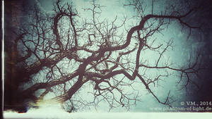 :: branches :: by Phantom-of-light