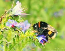:: bumblebee :: by Phantom-of-light