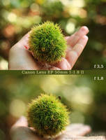 :: Canon 50mm bokeh :: by Phantom-of-light