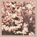 :: vintage blossom :: by Phantom-of-light