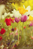 :: spring flowers :: by Phantom-of-light