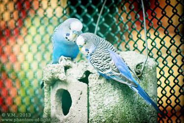 :: parrot :: by Phantom-of-light