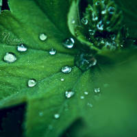 Drop of Poison by NanaPHOTOGRAPHY