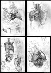 Anatomical Sketch Series I by Gorrem