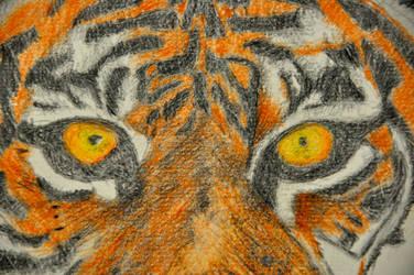 Tiger #2 by GwyniesArt