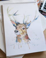 Stag by SophieArabella
